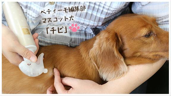 ペティーモ編集部マスコット犬「チビ」