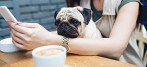 わんことスタバ・ドッグカフェ