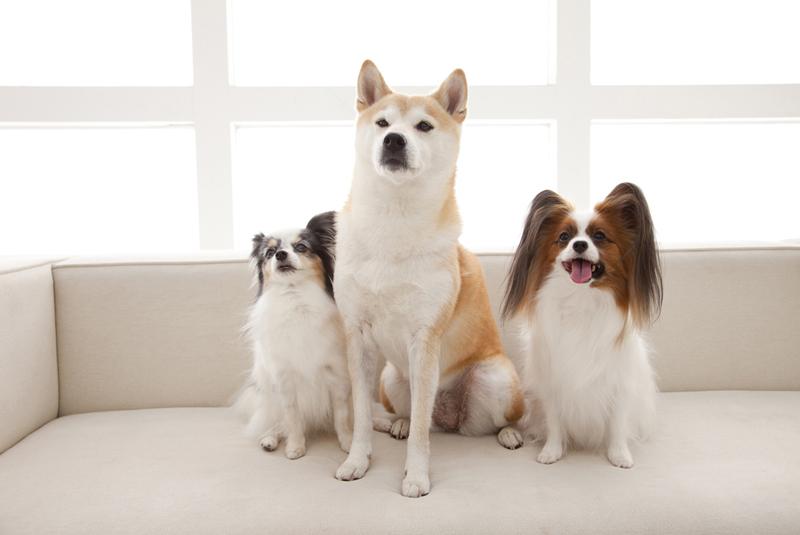 犬の換毛期(毛替わり)に知っておきたい知識とお手入れ
