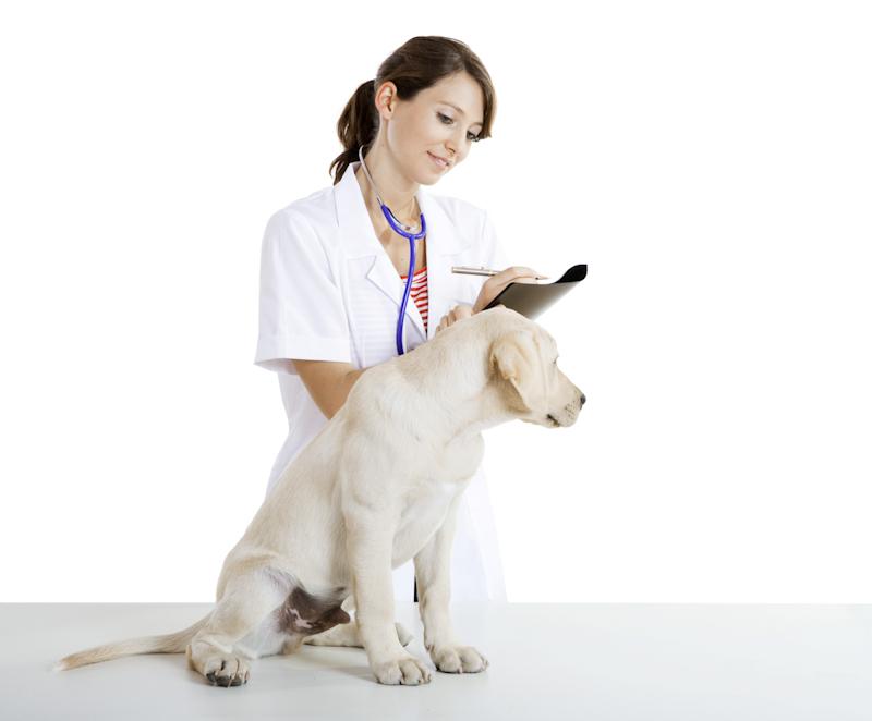 犬の皮膚病の症状や肌荒れに対する知識と解決方法