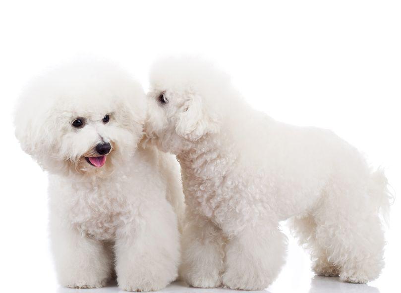 室内犬の臭い対策!消臭剤の使い方やお手製ミョウバン水で解決!