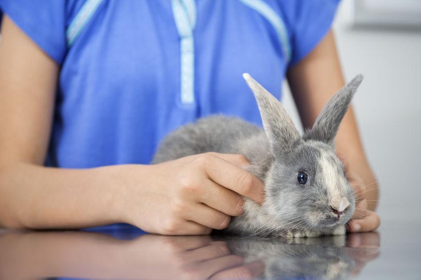 ウサギの皮膚病の症状や肌荒れについて解説!