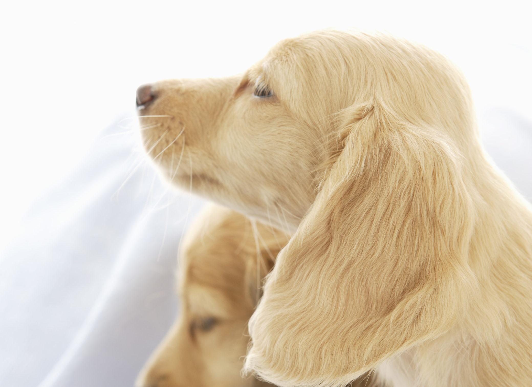 犬の皮膚トラブルに効果的な保湿剤とは