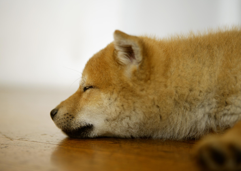犬の皮膚病で多い「膿皮症」ってどんな症状?具体的な対策法