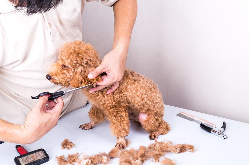 犬の敏感肌には注意してあげたいカットスタイル